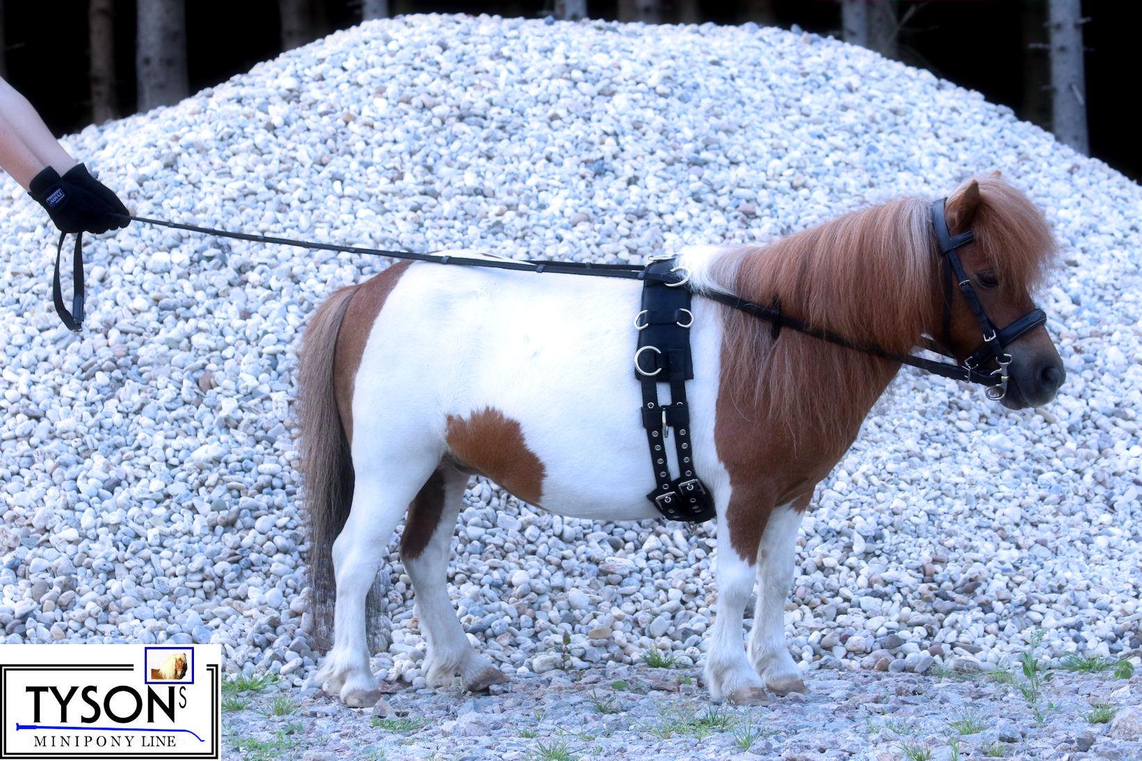 Gurtzügel mit Lederstegen Shetty Pony schwarz NEU Paardrijden