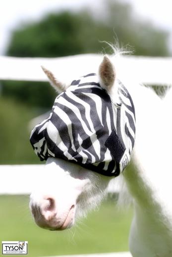 Fliegenhaube Fliegenmaske ZEBRA MS S P VB WB XF  ohne Ohren