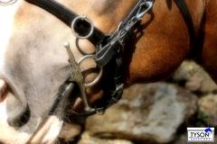 Leder Kappzaum  Minishetty Shetty Pony VB WB + Gebisseinhäng