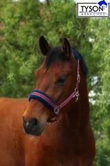 Halfter Fleece Gloria  Halfter weich unterlegt Pony VB WB EX FUL