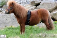 Minipony Shetty Longiergurt Plüschi MS / S Pony Schwarz