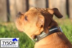 Hundehalsband Leder Schwarz  Gr. M L XL  Strass Extra Breit