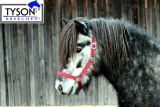 Nylon Stallhalfter Weidehalfter  Halfter Pony, VB, WB  Weinrot