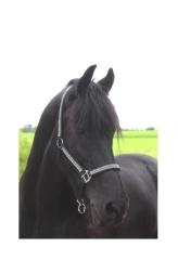 Halfter  Nylon Schwarz GLITZER ! Shetty Pony VB WB Extra Full