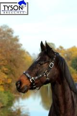 Halfter Stars Schwarz Lack Sterne MS Shetty Pony VB WB ExFULL