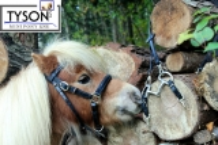 Wanderreithalfter Gr. Pony  Leder + Snap ! Handpferd