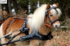 Marathon Kumtgeschirr Minishetty Shetty Pony 1- Spänner 2 Spänner Marathonkumpt