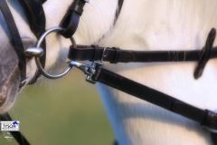 Ausbinder Stoßzügel Leder Pony/ VB mit Gummiring