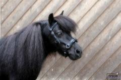 Natan Kappzaum Kunstleder Nasenteil BIEGSAM Ergonomisch MS S Pony