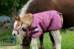 1200 D Fohlendecke DARIO Kaltblut Warmblut NUR KLETT BLAU Pink Regendecke 55 65 cm