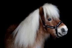 Halfter Lennox Nieten Nylon MMS MS S Pony VB WB X Full Schwarz Nietenhalfter